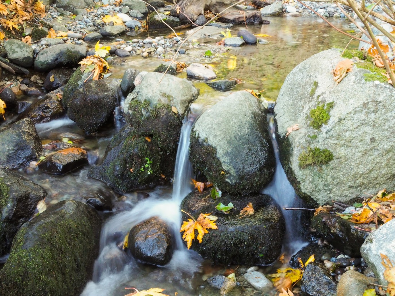 salish_creek_6
