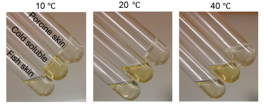 ​  Thermal gelation of different GelMA hydrogels at various temperatures  ​